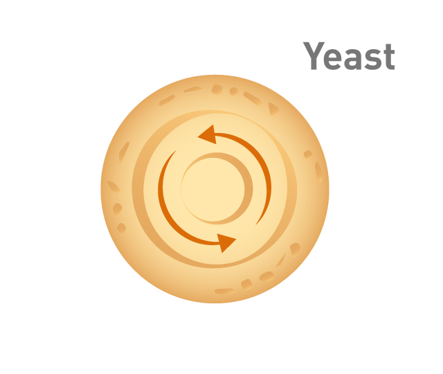 Graphic showing the centrifugation of yeast extract
