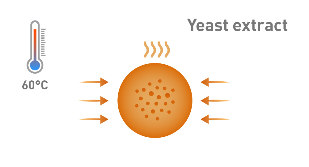 Graphic showing the evaporation and concentration of yeast extract